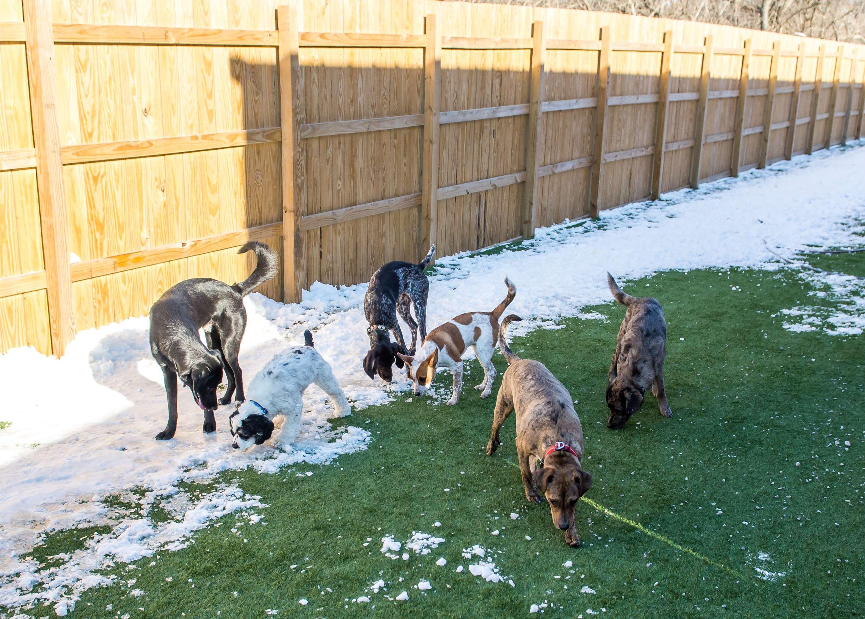 The local wag lexington ky pet supplies photos solutioingenieria Choice Image