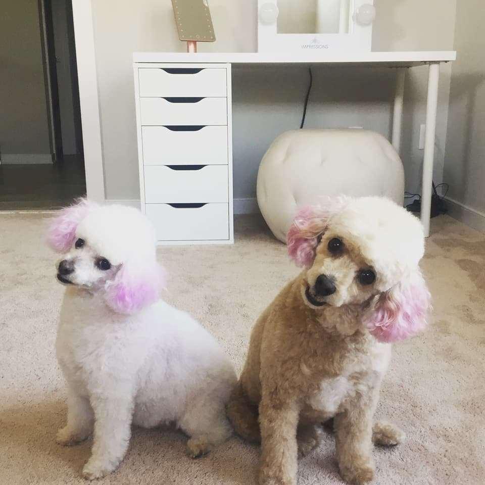 Dog krazy carytown richmond va pet supplies photos solutioingenieria Image collections