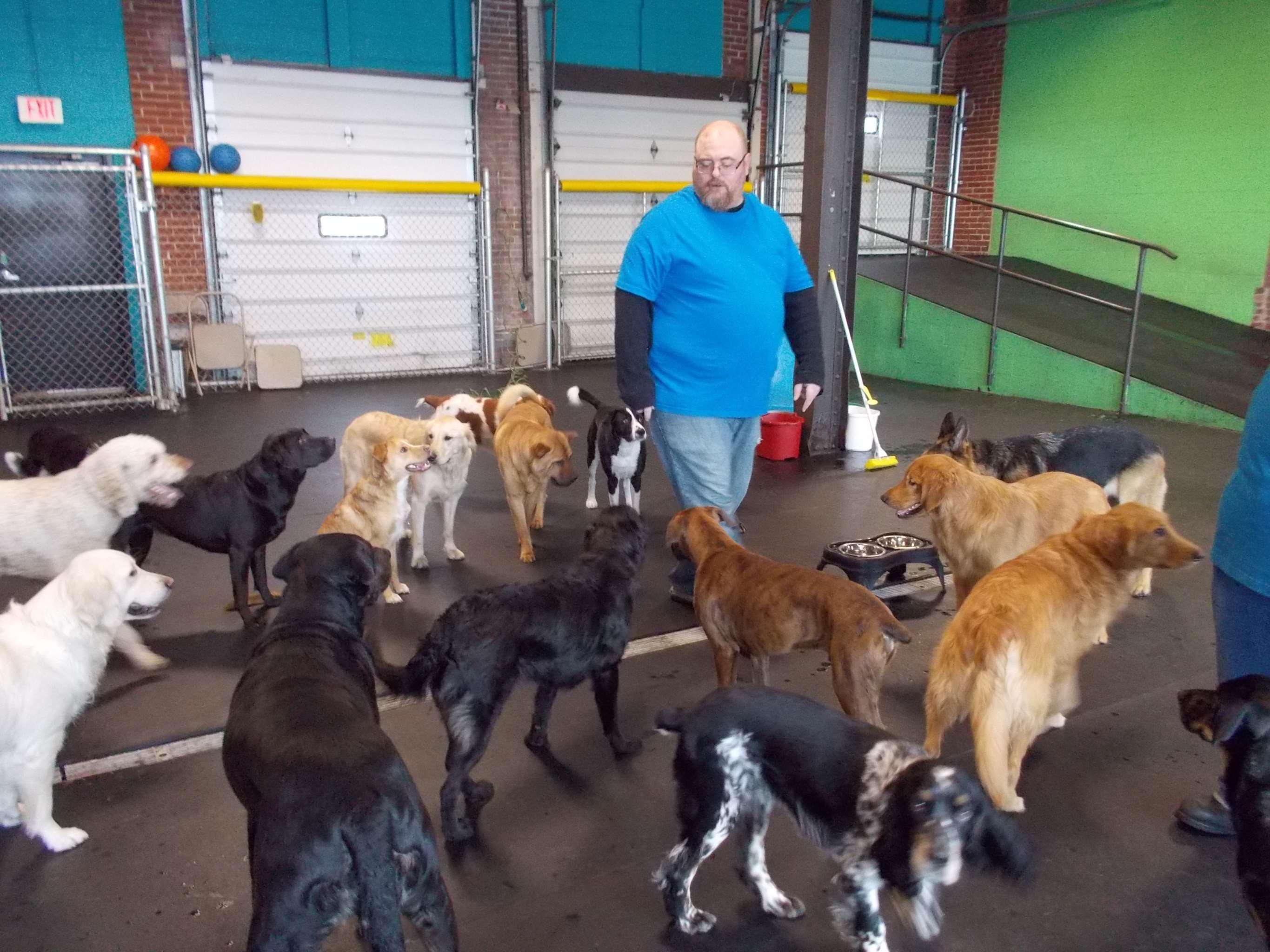 Peninsula Pups Doggie Daycare Inc Erie Pa Pet Supplies