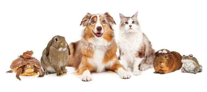 Tyrannosaurus Pets