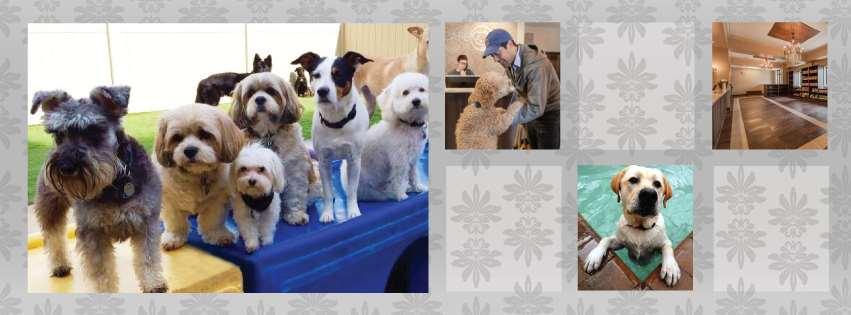 Pet Care Plus, Ltd.