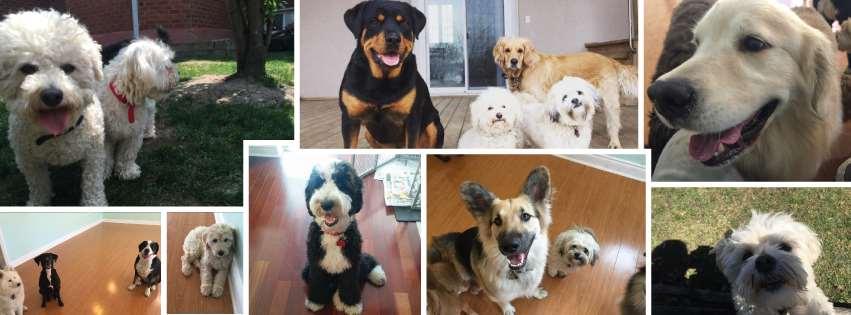 Doggie Basics