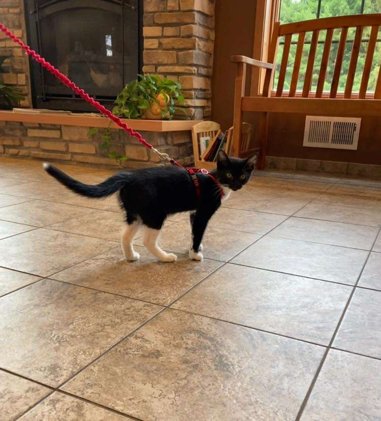 Willow Springs Veterinary Clinic