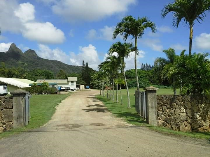 V o ranch products waimanalo hi pet supplies for Waimanalo feed supply