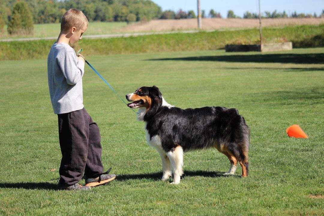 Better Dog Training & Behavior