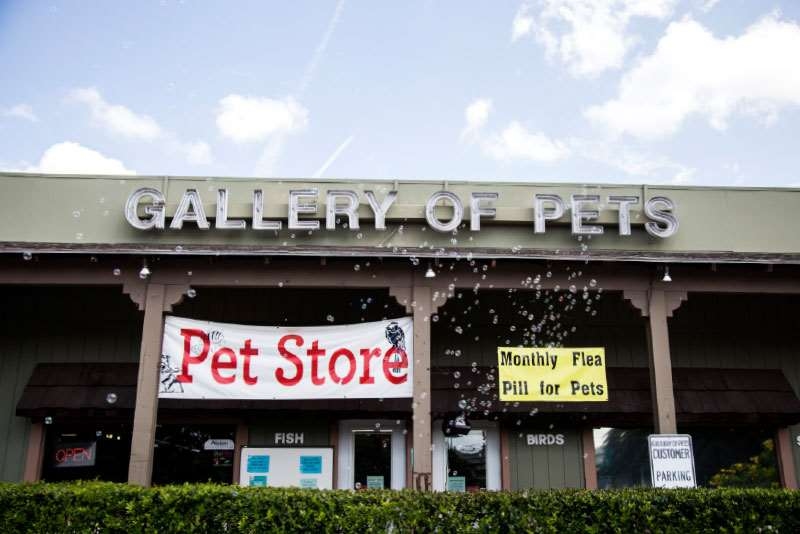 Gallery of Pets
