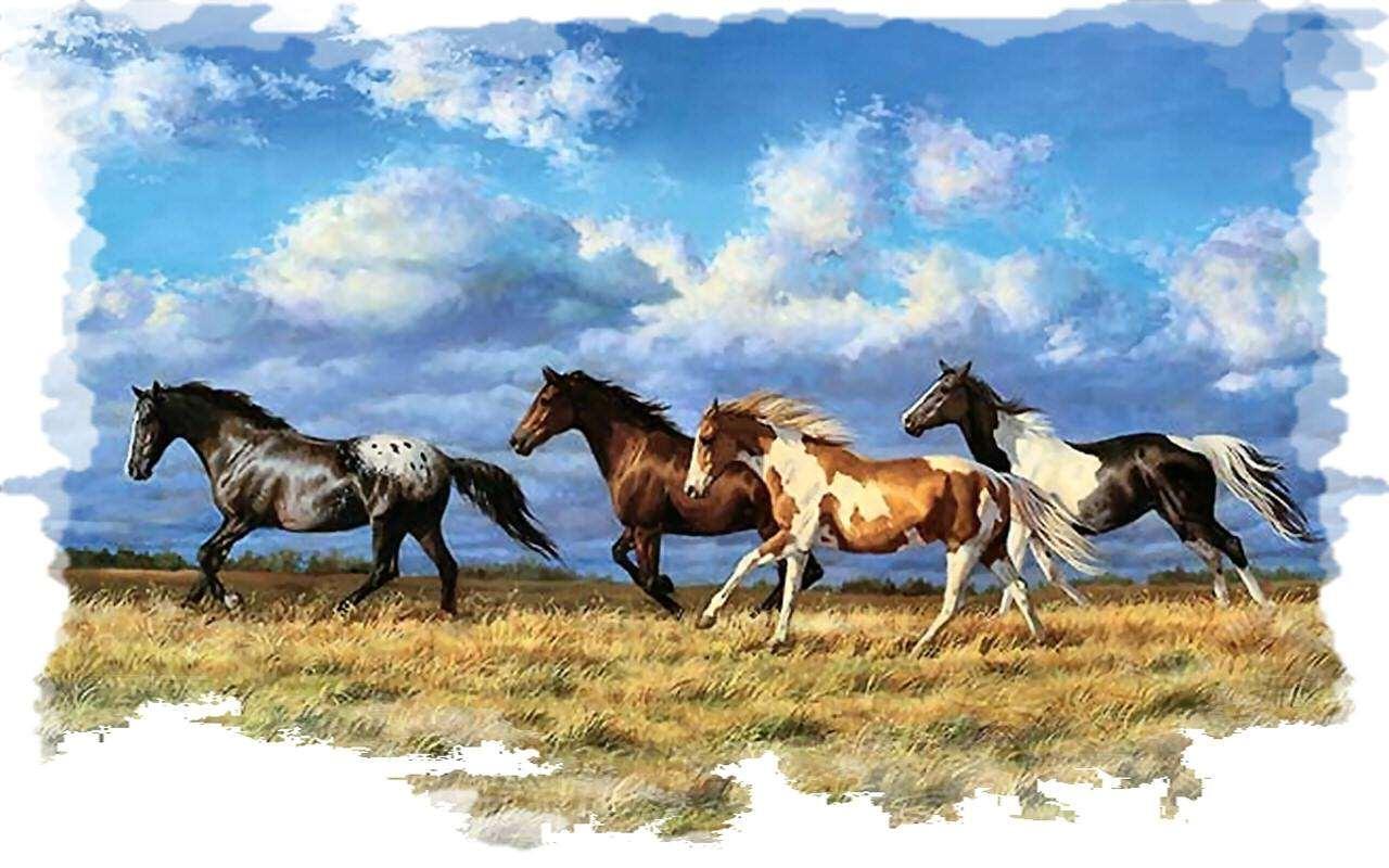 Novato Horse and Pet Supply