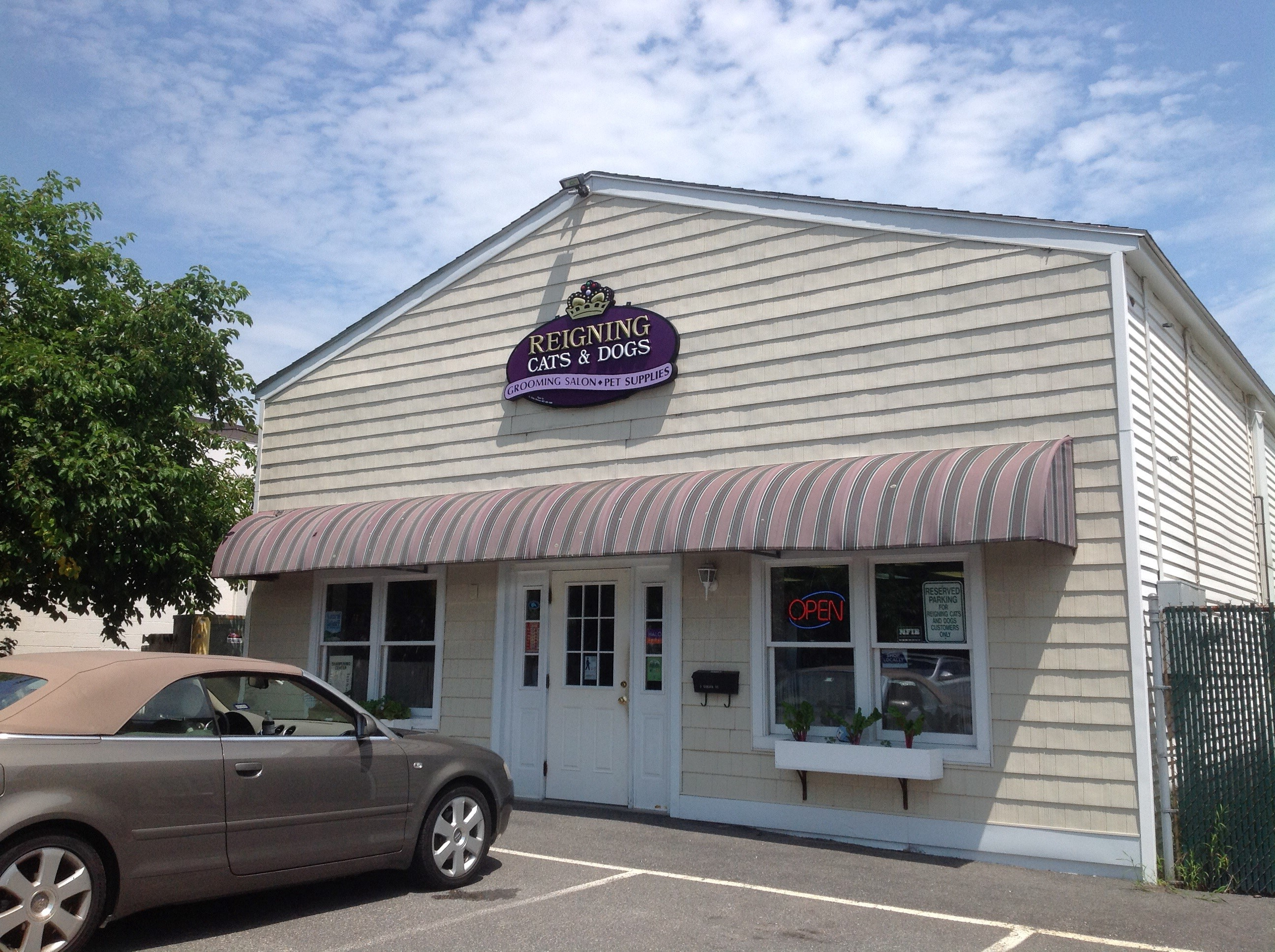 Reigning Cats And Dogs Kennebunk
