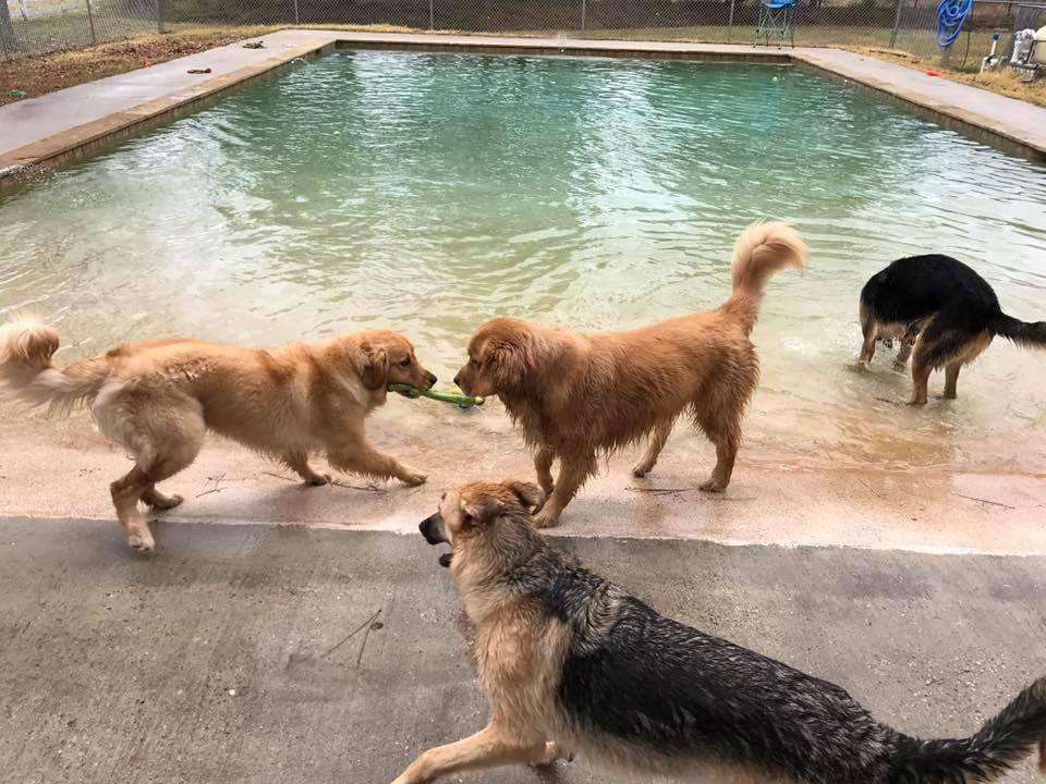 The Barkly Pet Retreat & Spa