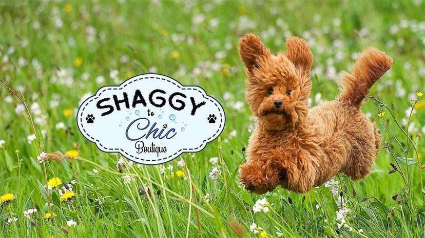Shaggy to Chic Boutique