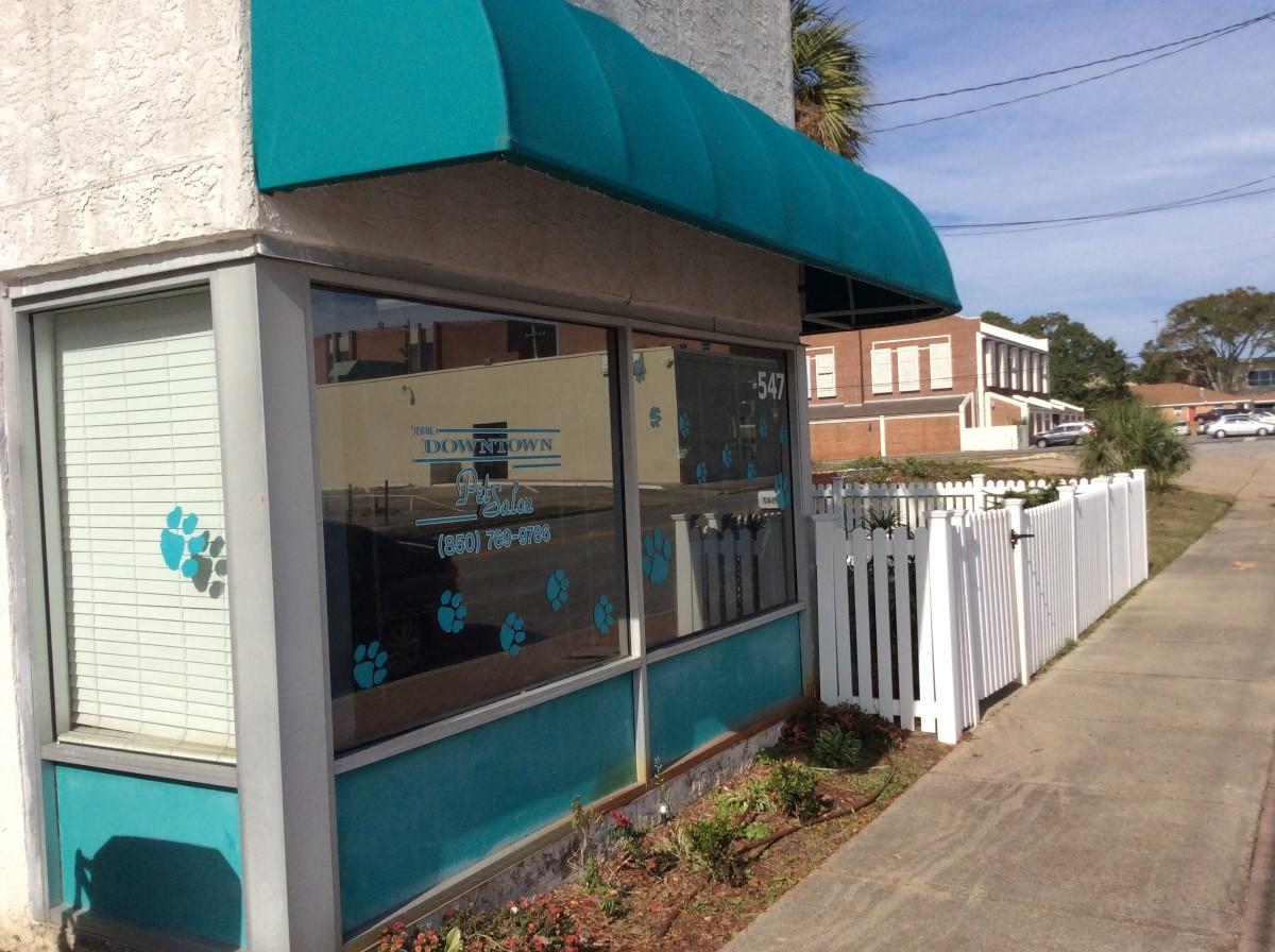 Downtown pet salon panama city fl pet supplies for A family pet salon
