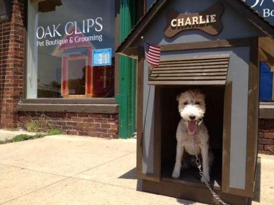 Oak Clips Pet Boutique & Grooming