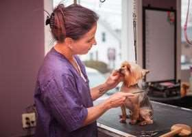 PET-icure Pet Grooming & Supplies