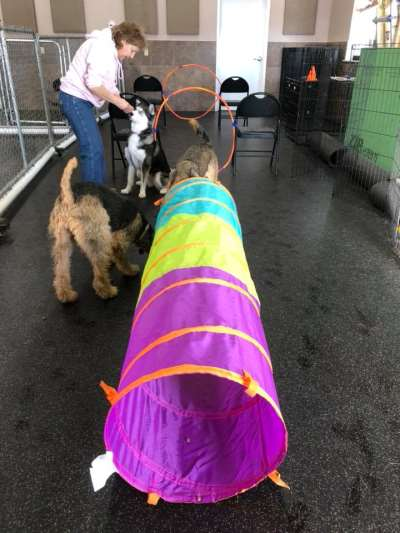 Harveys home garden pet center johnstown ny pet supplies photos solutioingenieria Gallery