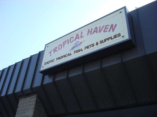 Tropical Haven