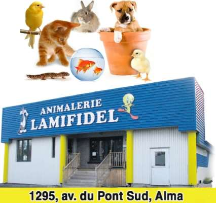 Lamifidel