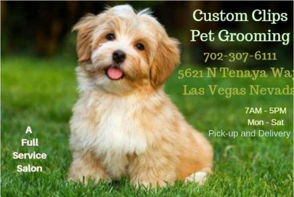 Custom Clips Pet Grooming