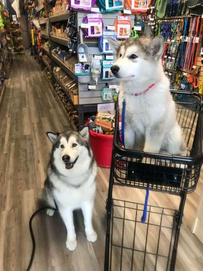 Dog Supplies Outlet