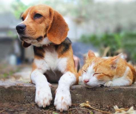 Pet Needs Etc
