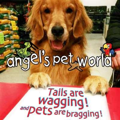 Angel's Pet World Too