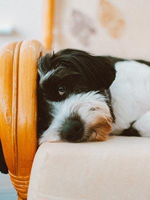 Dog Wellness Clues
