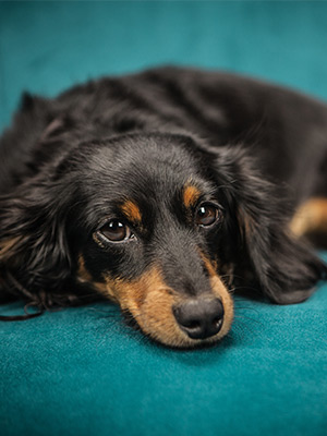 Managing Separation Anxiety & Phobias in Dogs