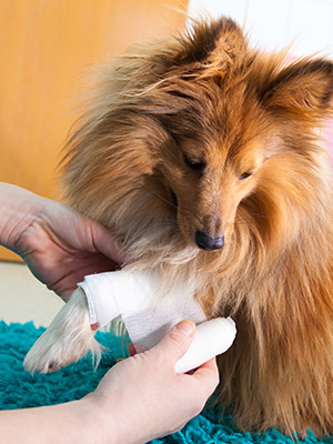 Help Your Dog Heal: First Aid Tips