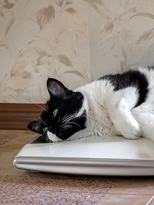 Your Cat's Weight: Why It Matters