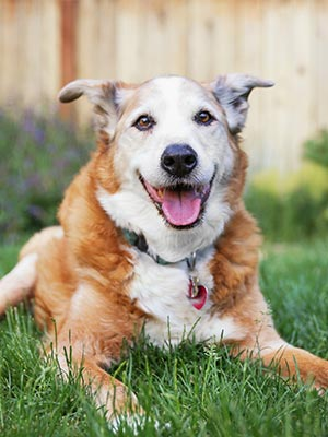 Senior Dogs: Their Happiness & Quality of Life