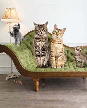 The Feline Gold Standard