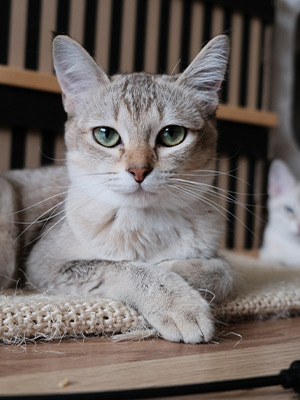 Benefits of Canned & Dry Food for Cats