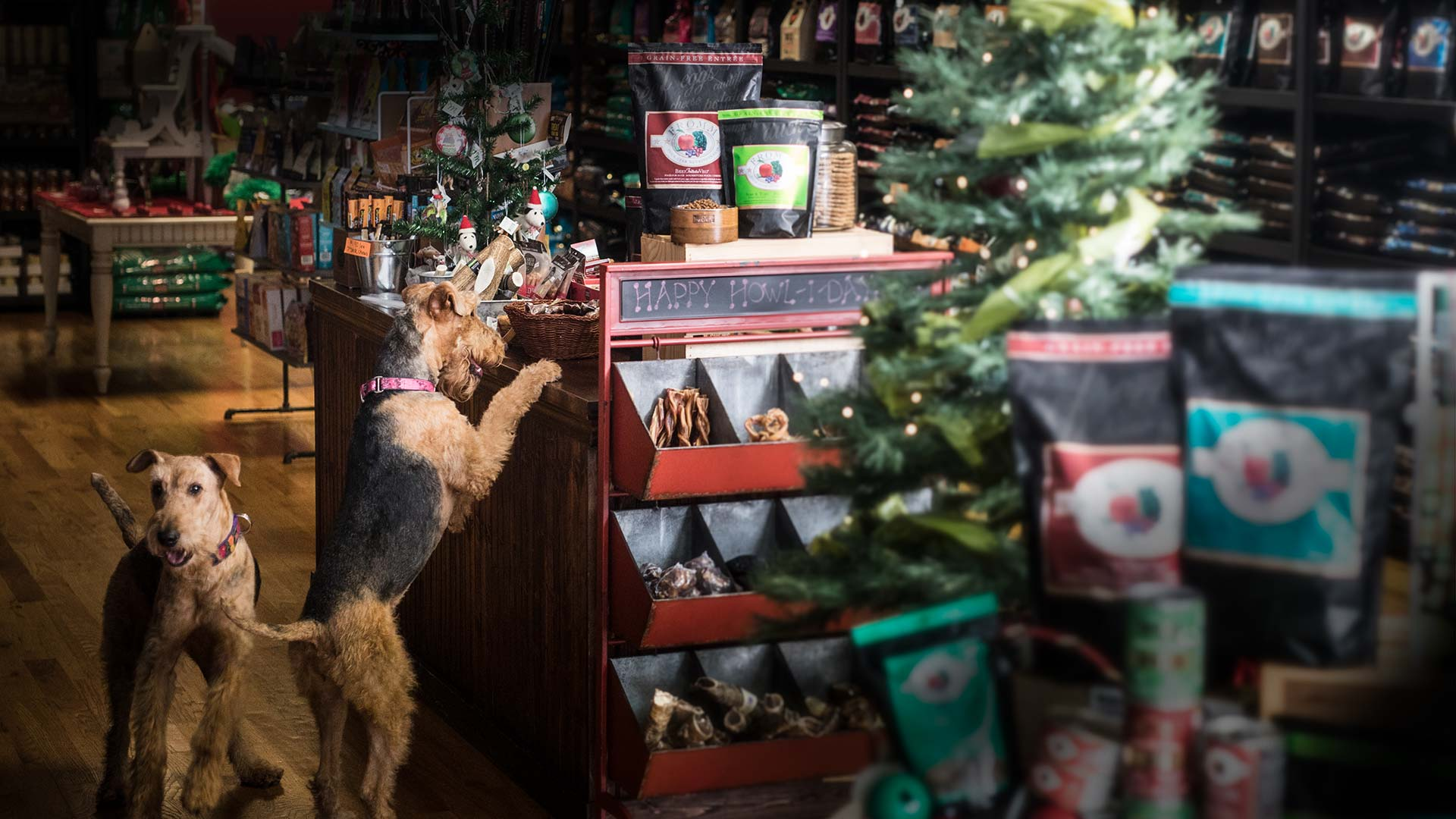 Dogs Shopping for the Holidays