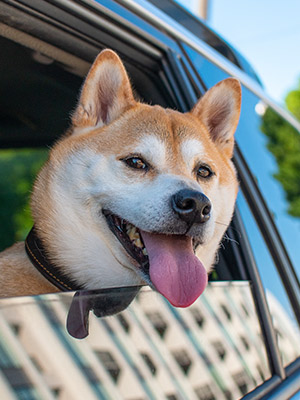 Travel with Your Dog: How to Have the Best Trip