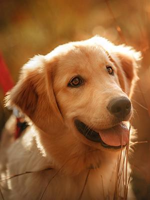 Prebiotics & Probiotics: Benefits for your Pet