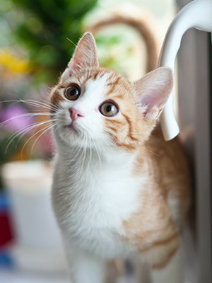 6 Tips for New Cat Owners